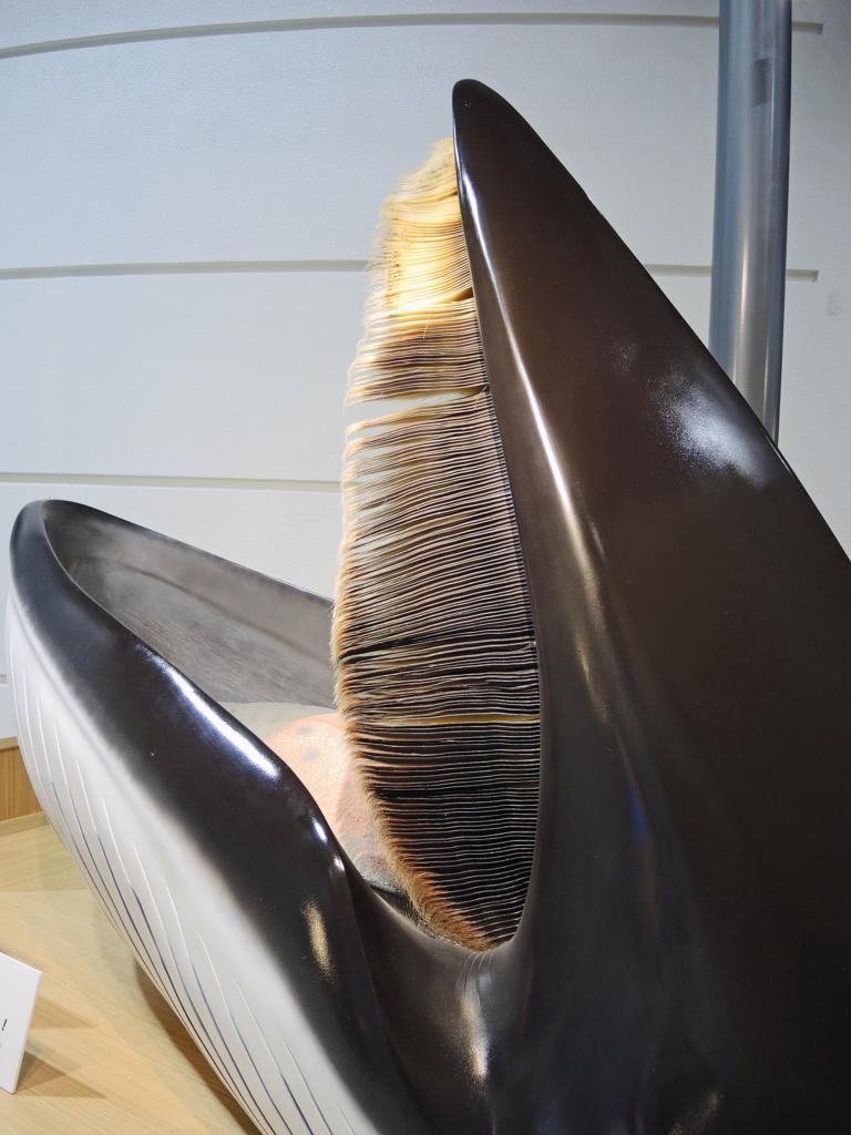 鯨と海の科学館(山田町)-4-17.09