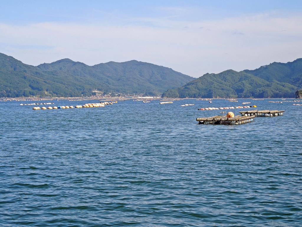f:id:sashimi-fish1:20171106075145j:image:w600:left