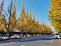 神宮外苑いちょう並木(新宿区)-1-17.11