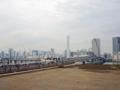 豊洲新市場付近(江東区)-3-17.12