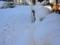雪景色(わが家)-2-18.01