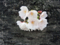 恩田川の桜(町田)-10-18.03