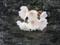 恩田川の桜(町田)-5-18.03