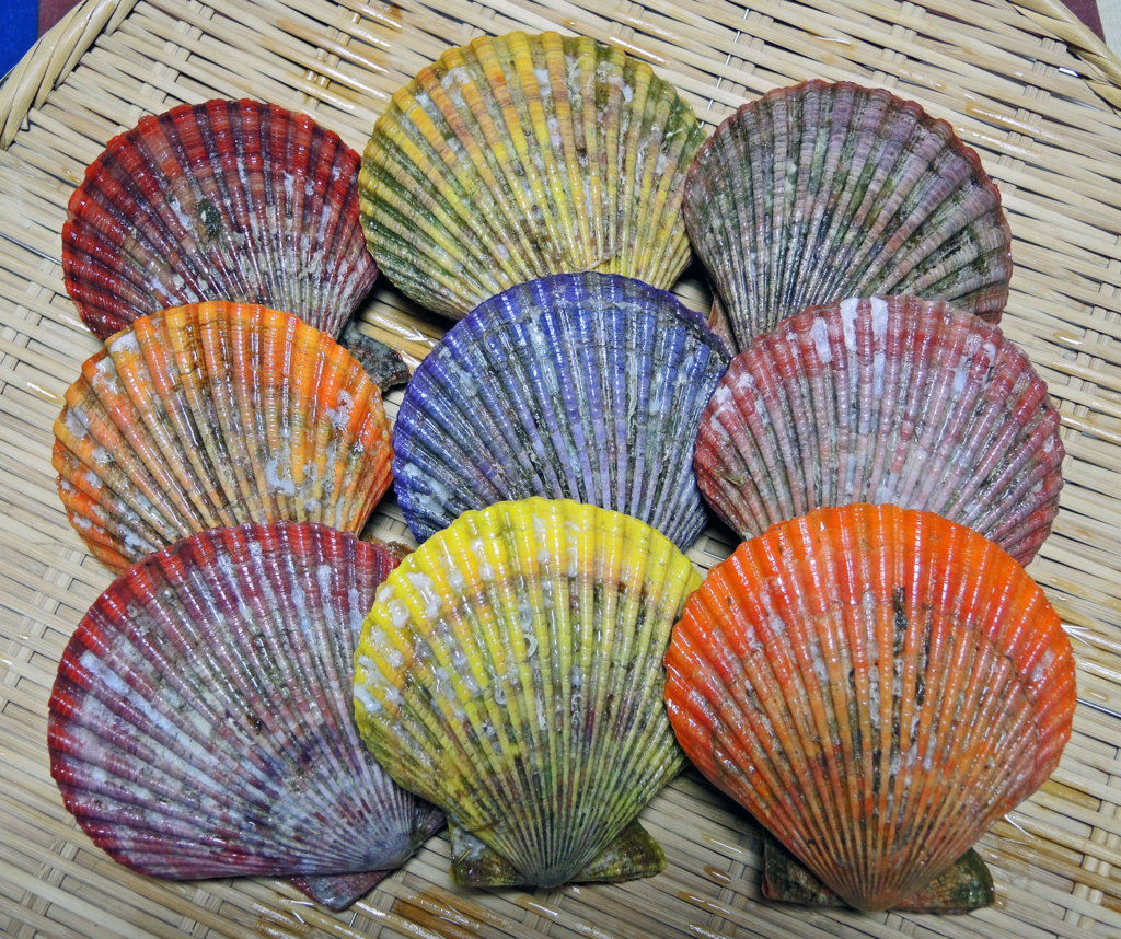 f:id:sashimi-fish1:20180518155037j:image:w120:left