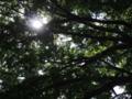 西荻、坂の上公園(杉並区)-8-18.06