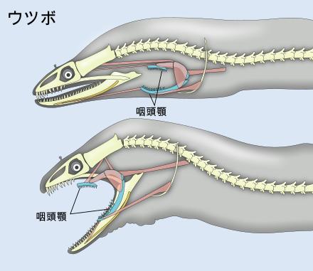 f:id:sashimi-fish1:20180621165117p:image:w130:right