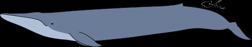 f:id:sashimi-fish1:20180816154020p:image:w150:left
