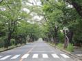 夜ノ森、桜並木(富岡町)-1-18.07
