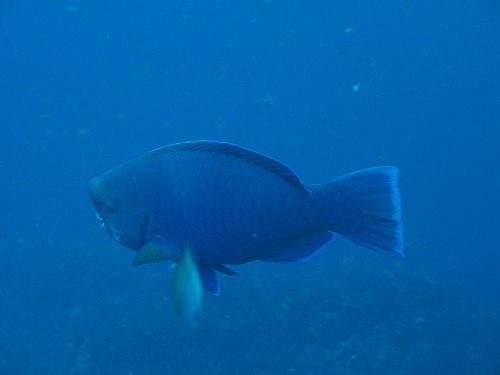 f:id:sashimi-fish1:20180924155415j:image:w90:left