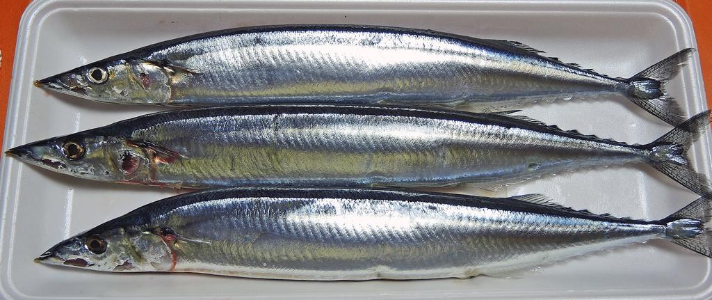 f:id:sashimi-fish1:20180929171334j:image:w150:left