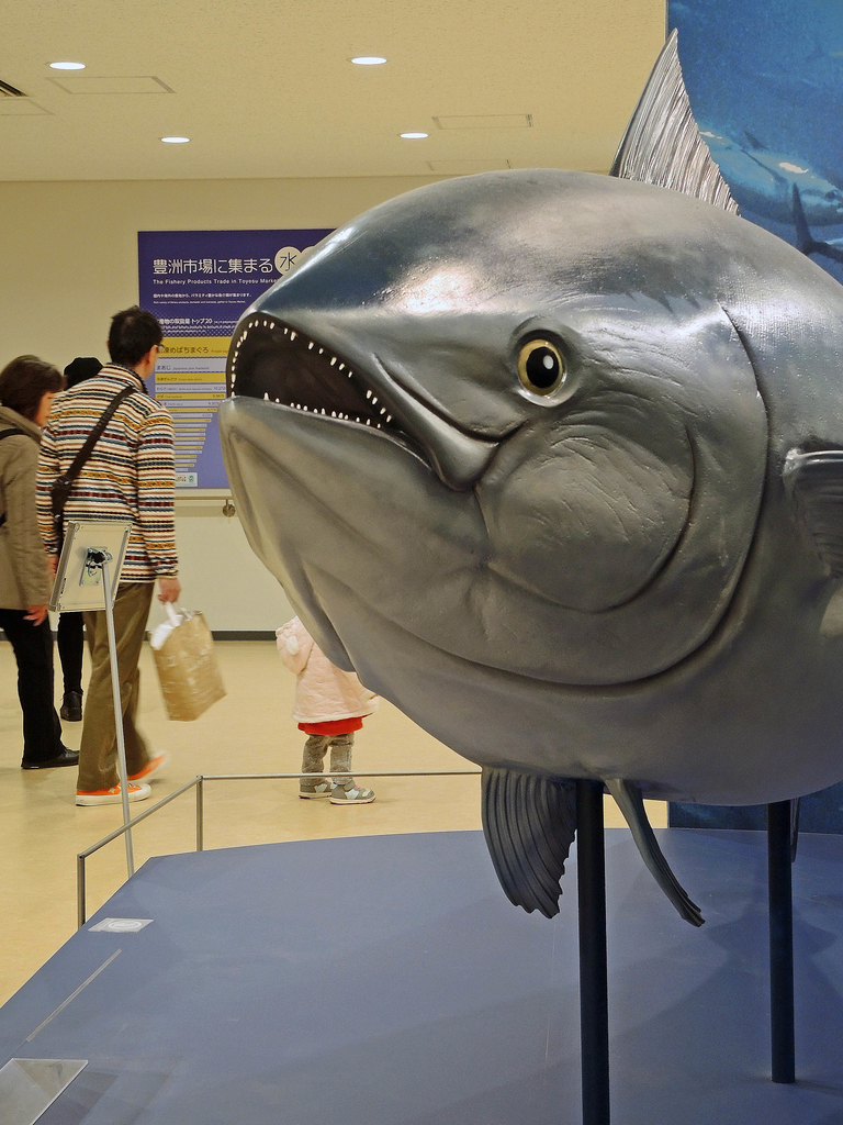 f:id:sashimi-fish1:20190206093125j:image:w110:right
