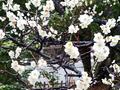泉岳寺(港区)-2-19.03