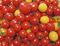 プラム型トマト、ドロップファーム(水戸市)-1-19.03