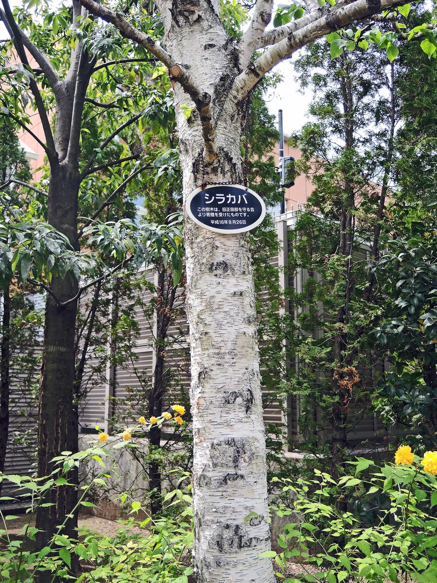 ねむの木の庭(品川区)-5-19.05
