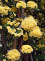 ねむの木の庭(品川区)-7-19.05