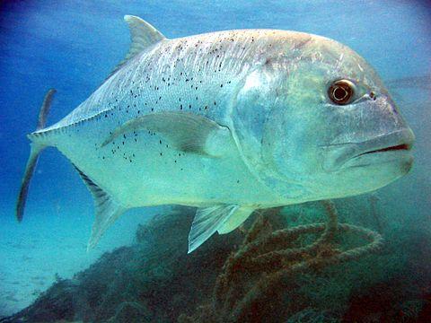 f:id:sashimi-fish1:20190523075035j:image:w200:right