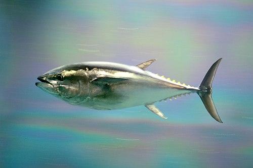 f:id:sashimi-fish1:20190816104906j:image:w220:right