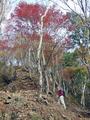 大山山行(神奈川県)-4-19.11