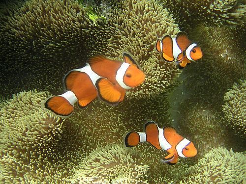 f:id:sashimi-fish1:20200131101220j:image:w150:right