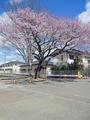 常磐線「夜ノ森」駅、付近(富岡町)-10-20.03
