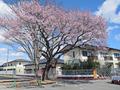 常磐線「夜ノ森」駅、付近(富岡町)-9-20.03