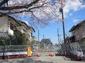 常磐線「夜ノ森」駅、付近(富岡町)-8-20.03
