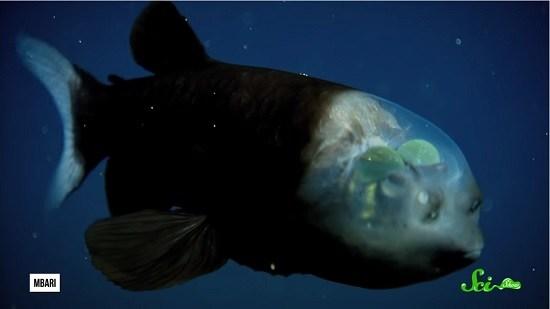 f:id:sashimi-fish1:20200504110747j:image:w220:right