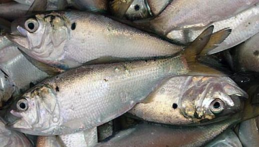 f:id:sashimi-fish1:20200605181258j:image:w130:right