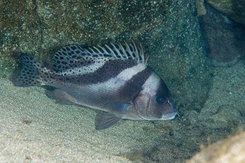 f:id:sashimi-fish1:20200730141912j:image:w200:right