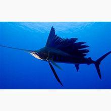 f:id:sashimi-fish1:20200821145256j:image:w200:right