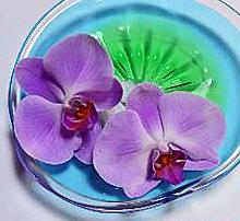 f:id:sashimi-fish1:20201216112514j:image:w140:left