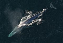 f:id:sashimi-fish1:20210130122148j:image:w250:right