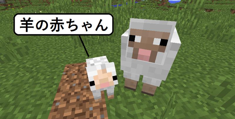 これが羊の赤ちゃん