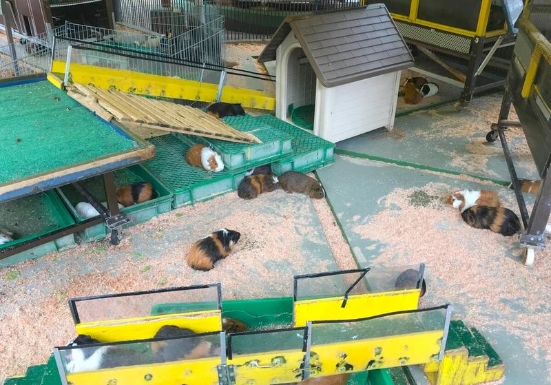 町田リス園の小動物コーナー