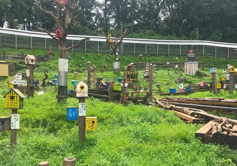 町田リス園の放し飼い広場