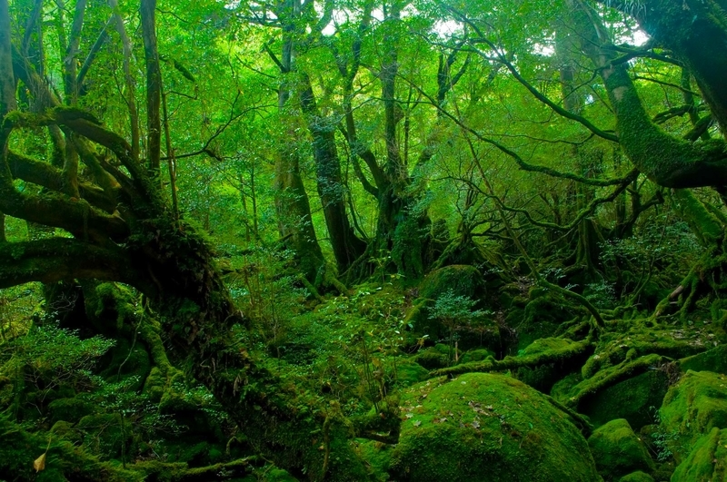 白谷雲水峡のもののけ姫の森