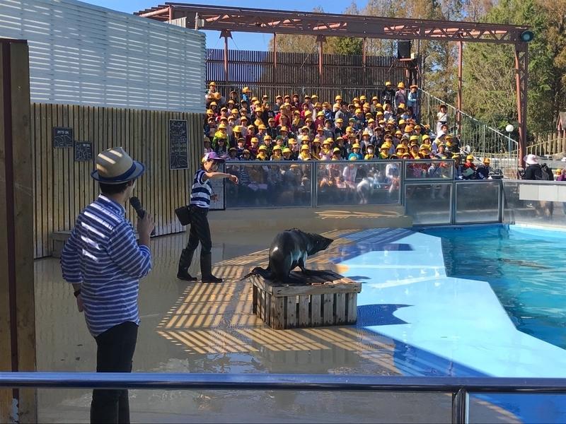 東武動物公園のオットセイのショー