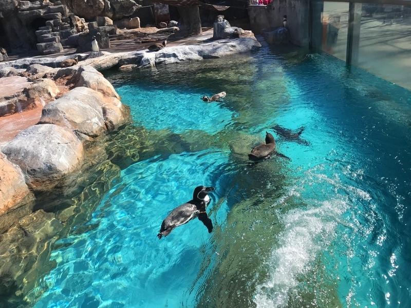 東武動物公園のペンギンコーナー