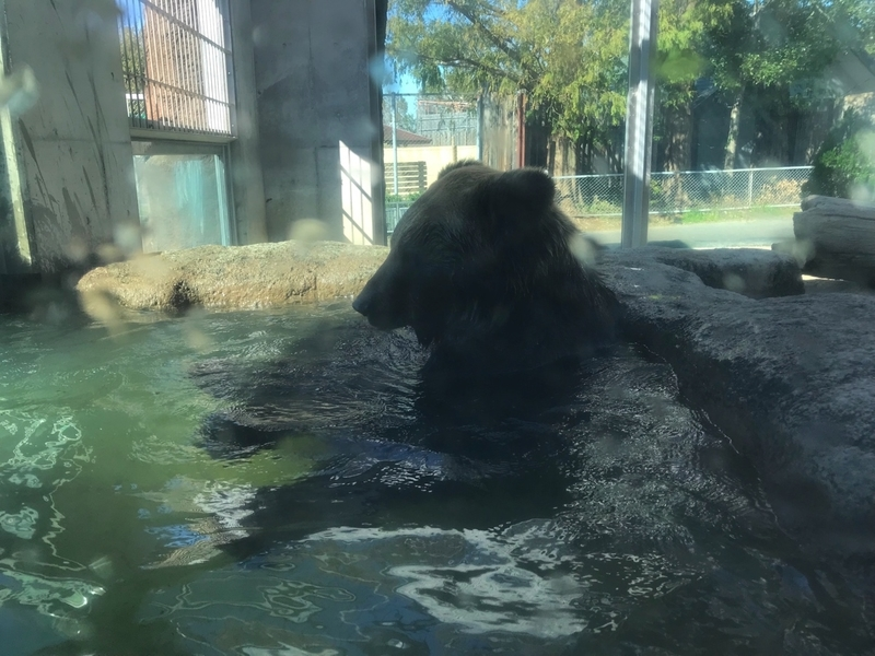 東武動物公園のヒグマの迫力