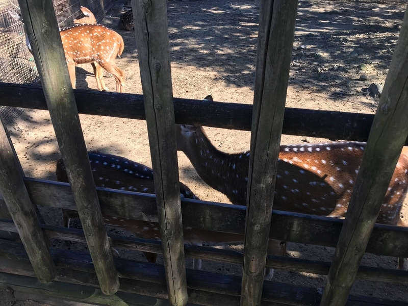東武動物公園の鹿コーナー