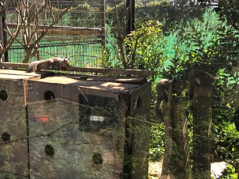 東武動物公園のホンドリスコーナー