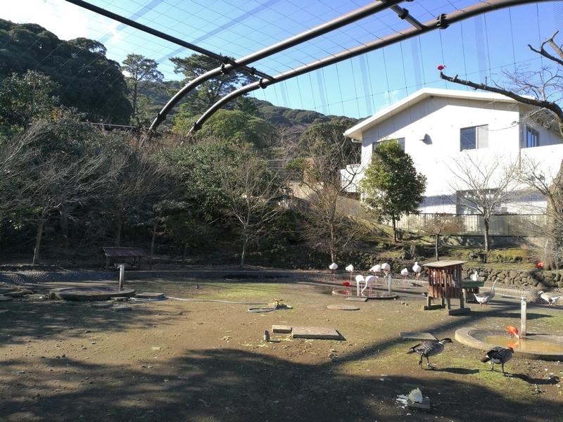 伊豆大島の大島公園動物園のフライングゲージ