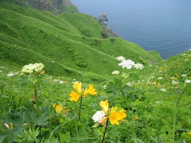 花の島のイメージ画像