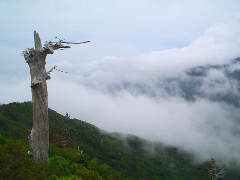 屋久島の太鼓岩