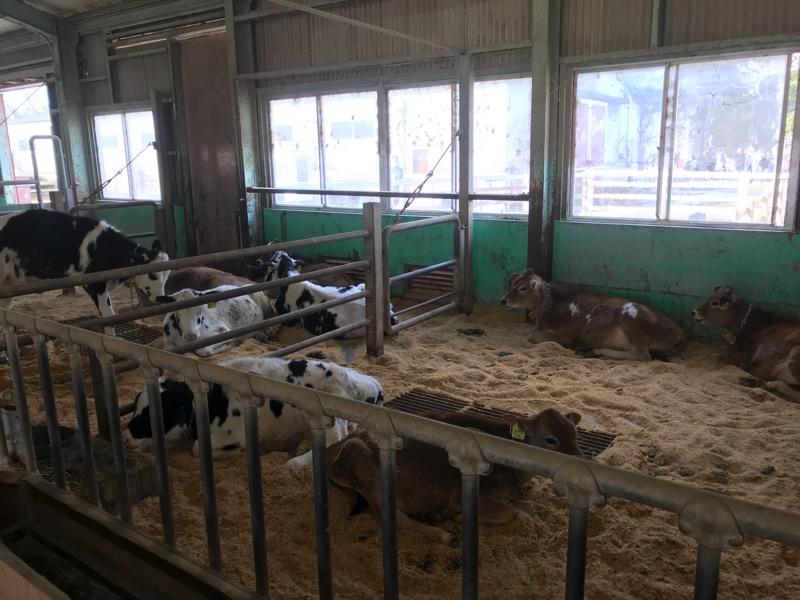 成田ゆめ牧場の牛舎内の様子