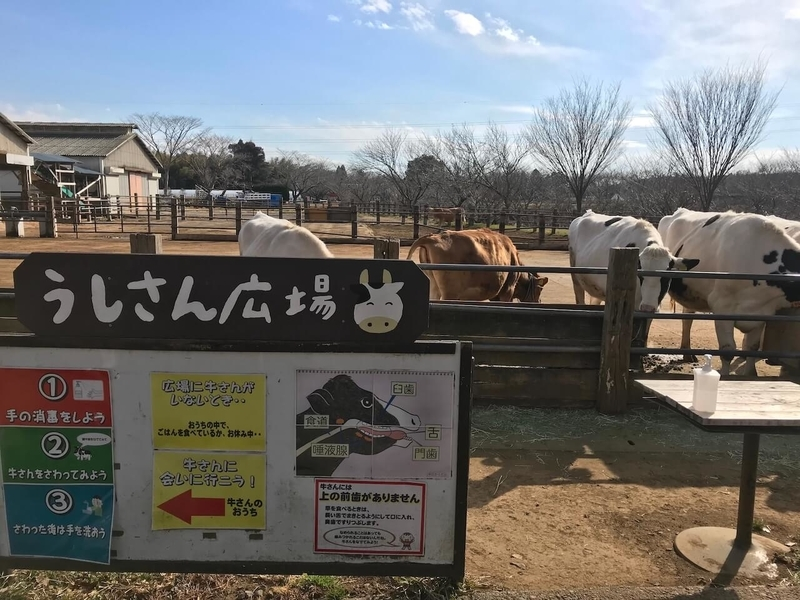 成田ゆめ牧場の牛さん広場