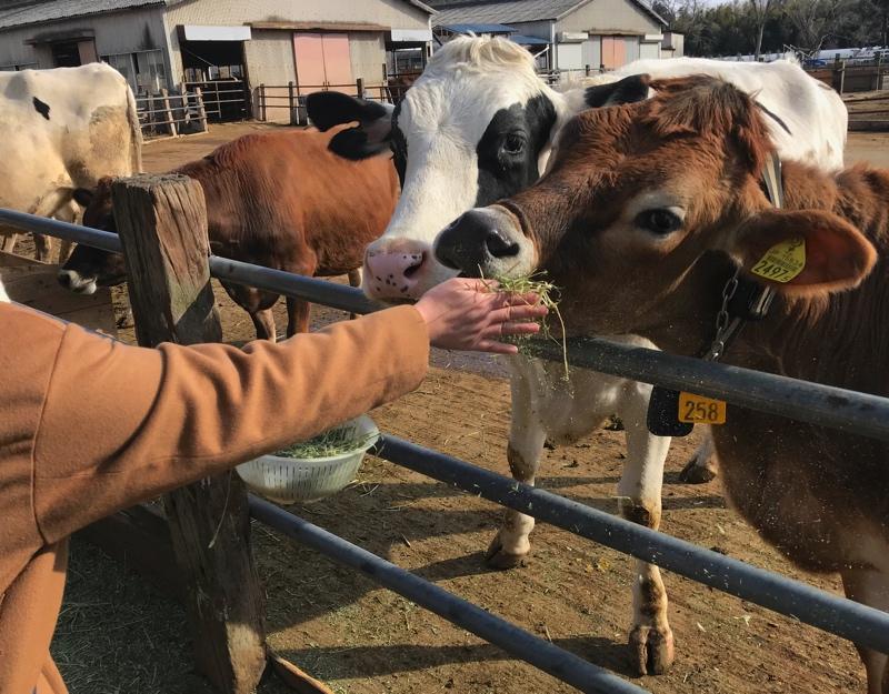 成田ゆめ牧場の餌やり体験