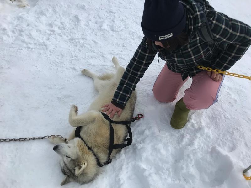 冬のノースサファリサッポロのシベリアンハスキー