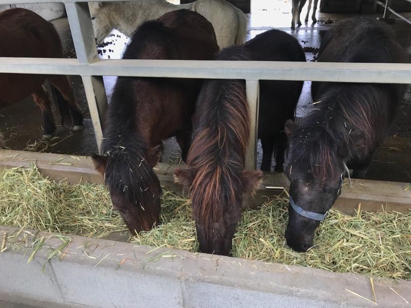 ほっこりする馬の動物園「のまうまハイランド」