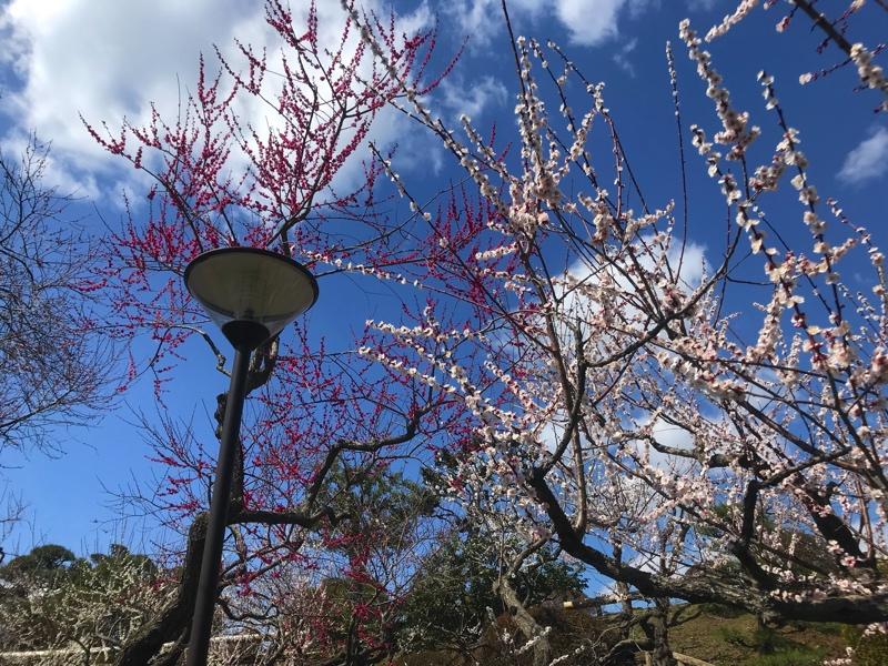偕楽園の梅まつりの風景